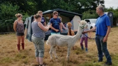 Julie and her friends getting acquainted with the Alpacas